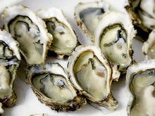 The Oyster And Wine Festival You Don't Want To Miss!