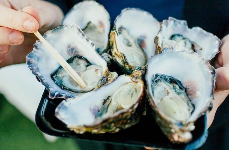 Oyster Festival, Brisbane