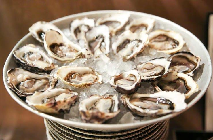 oyster festival sydney the morrison
