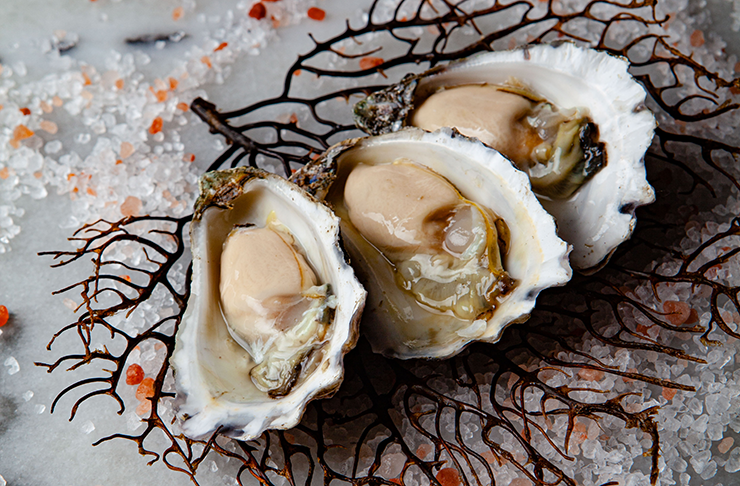 Three plump oysters atop a bed of salt and a delicate branch.