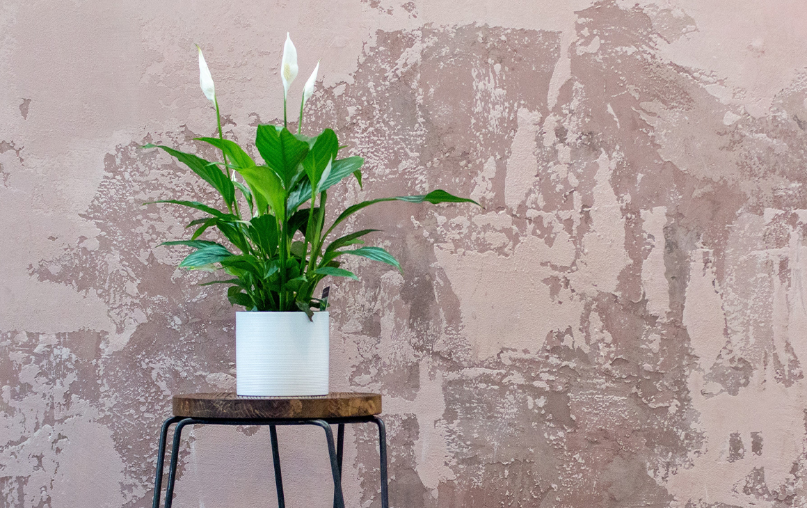 a potted peace lily on a stand next to a concrete wall