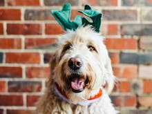 10 Last-Minute Christmas Gifts To Get For Your Pet