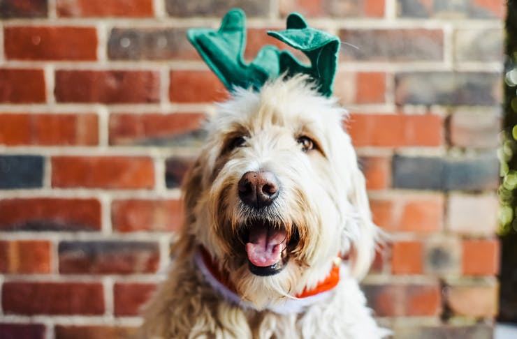 pet-christmas-gifts