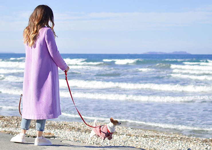 Best Walks On The Sunshine Coast You Can Do With Your Dog
