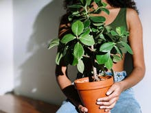 How To Master The Indoor Plant Game This Spring (Without Killing All Your Plants)