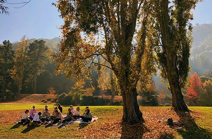 People having a picnic under a tree in the sun.