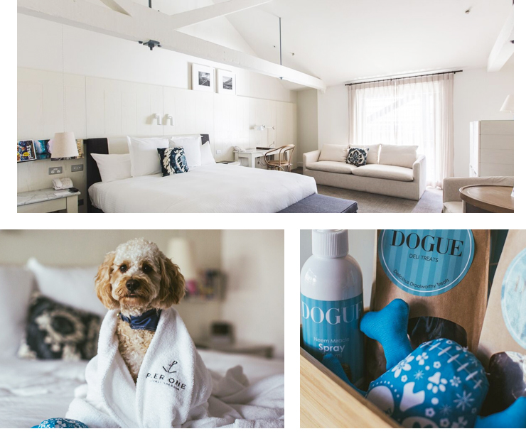 Treat Pawself Sydney S Best Dog Friendly Hotels Sydney The