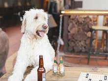 Drink Pints & Help Dogs At This Cool Event
