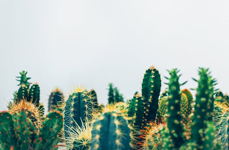plant-sale-brisbane