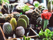 A Huge Indoor Plant Sale Is On This Weekend!