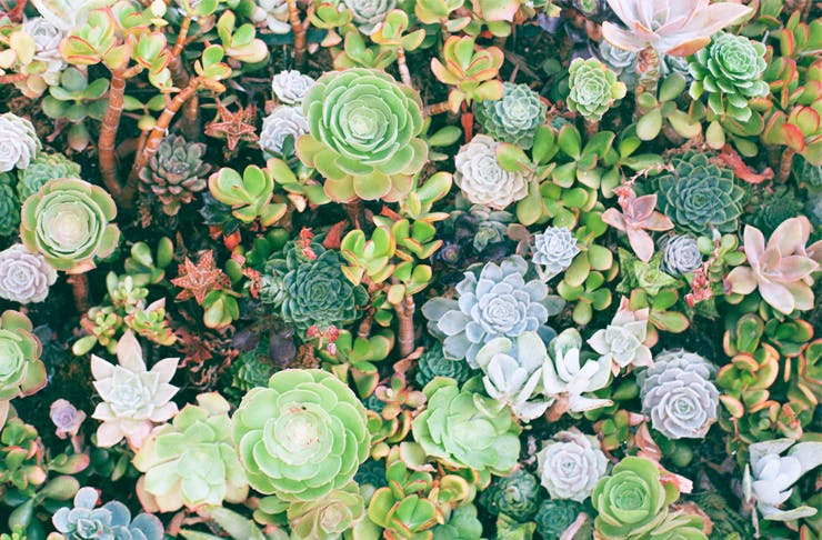 plant-sale-sydney