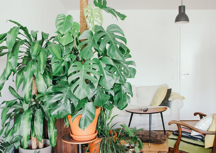 Get A Plant Baby Delivered To Your Door Thanks To This New Delivery Service