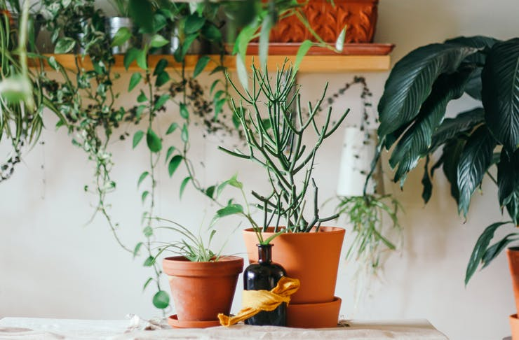 Plant Delivery Brisbane