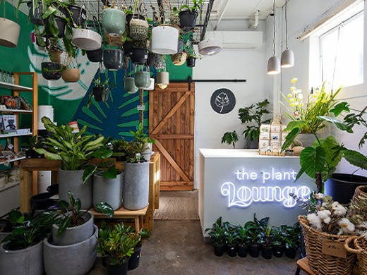 inside of a plant shop, with plants on the floor and hanging from the ceiling