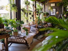 14 Of The Best Shops In Brisbane To Feed Your Plant Obsession