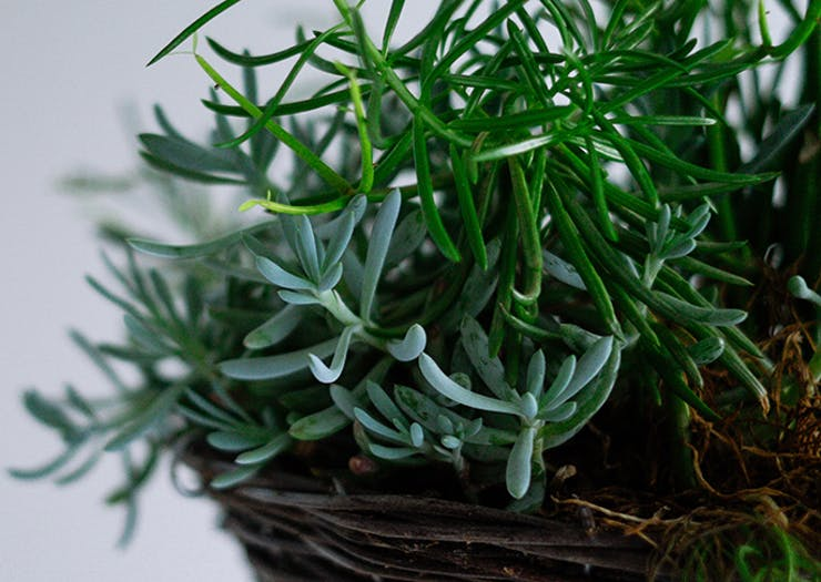 Here's What You Need To Know About The Coolest New Indoor Plant Subscription Service