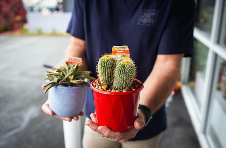 A guy holds two lovely looking plants in his hands.
