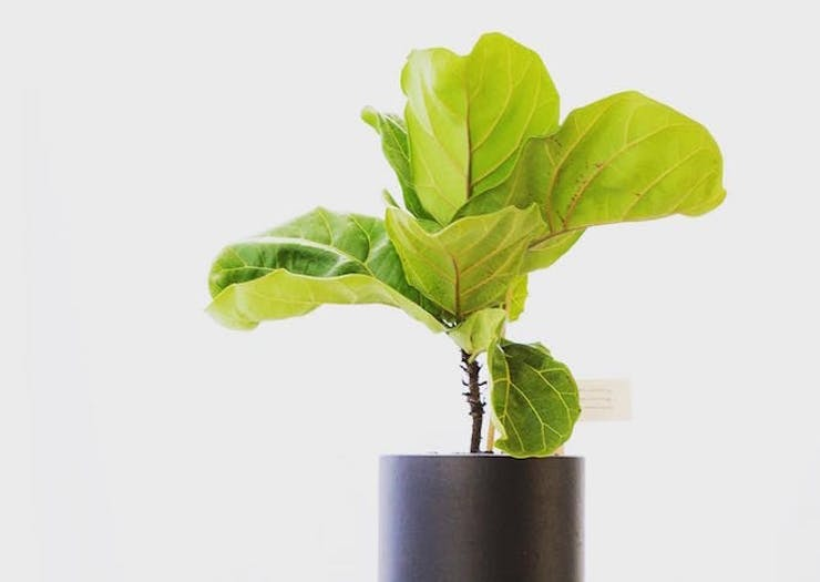 There's A New Online Shop Delivering Potted Plants In Perth!