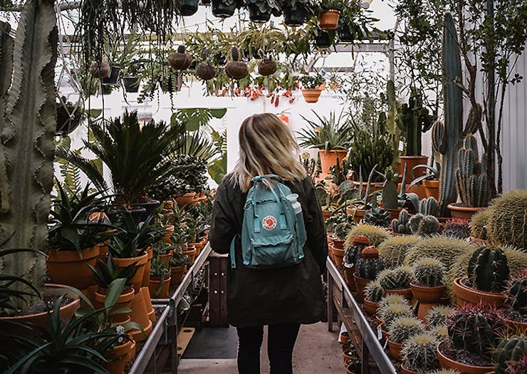 Get Excited, A Massive Plant Market Hits Auckland This Weekend