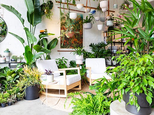 plantsmith-preston