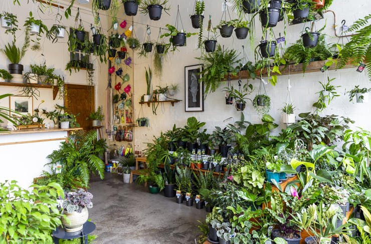 Melbourne S Best Nurseries Melbourne The Urban List