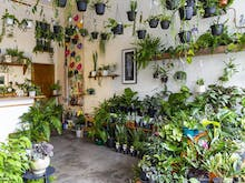 Where To Find Melbourne's Best Nurseries