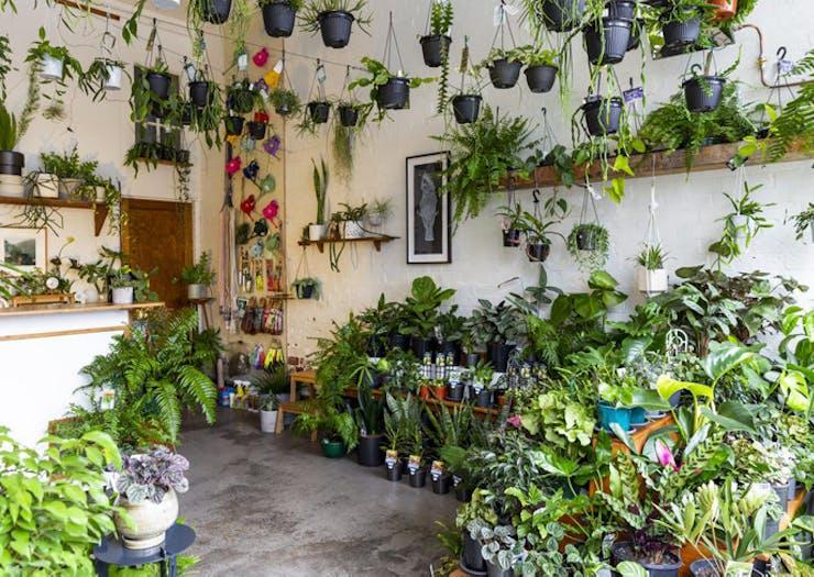 Where To Find Melbourne's Best Nurseries