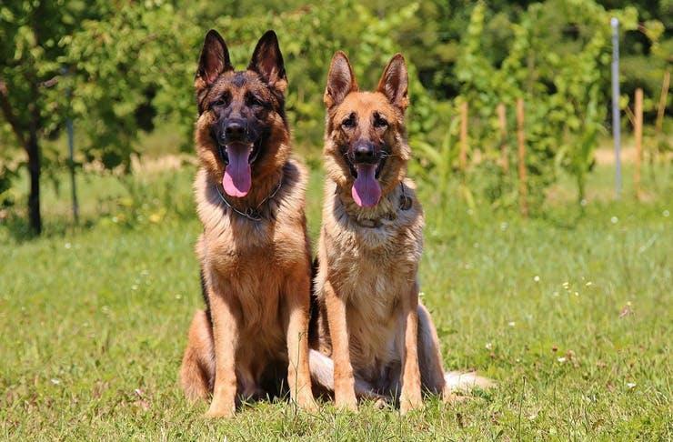 police dogs sydney
