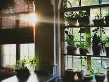 Find Your Perfect Plant Baby Whether You're A Newbie Or A Pro