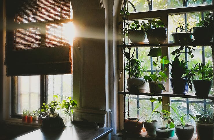 Pot plants sitting in a home