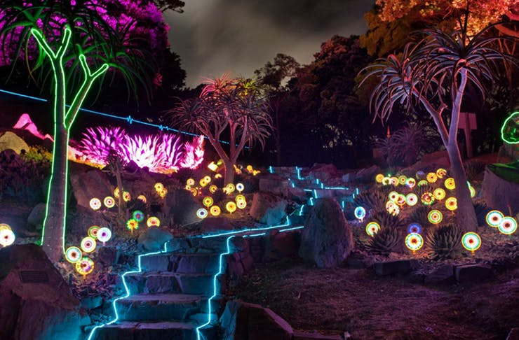 A Magical Glow-In-The-Dark Bush Walk Is Coming To Auckland!