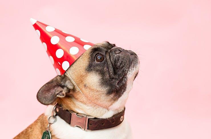 pug-party-brisbane