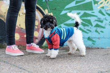 6 Of The Most Paw-some Dog Jackets