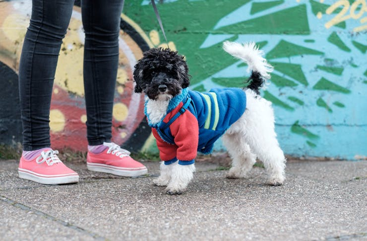 best dog jackets
