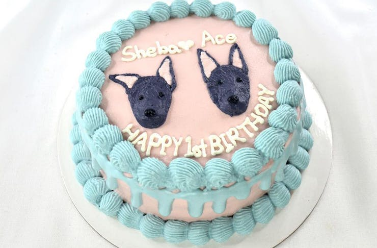 a cake with puppy faces on it