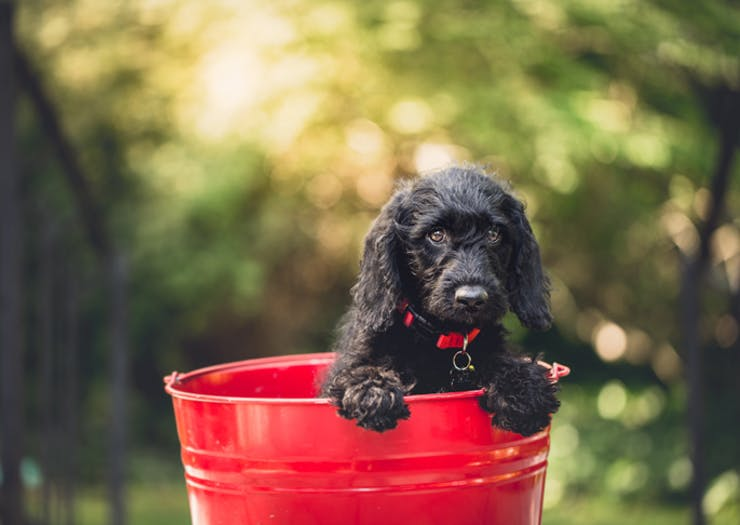 PSA: A Huge Puppy Party Is Happening This Weekend