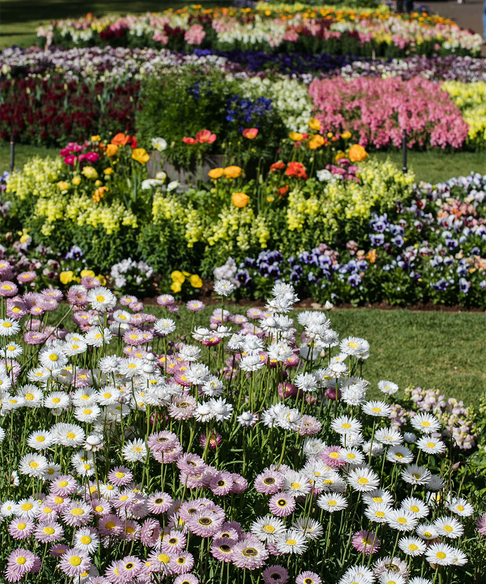 A Park filled with flowers