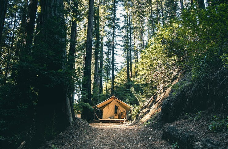 A glamping tent in a forest.