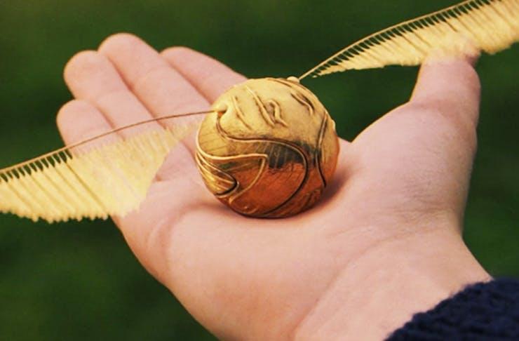 quidditch-game-brisbane