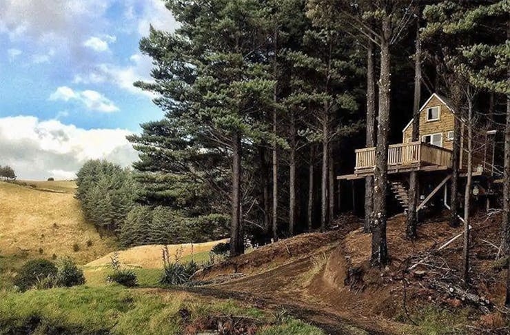 A tree house up in the impressive trees in Raglan