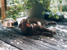 Cooked It | How To Make Wine For Your Cat