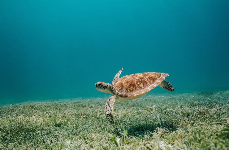 a sea turtle swimming in the ocean