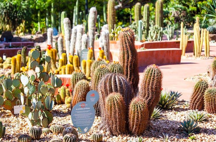 Various cacti in Melbourne's Royal Botanic Gardens Arid Garden