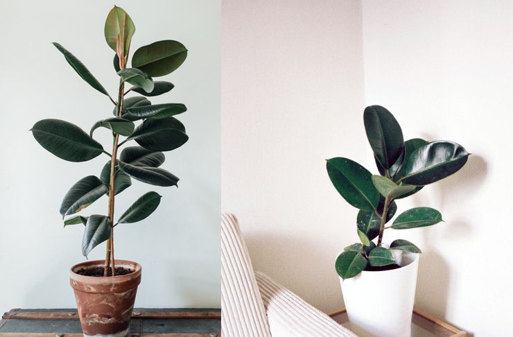 8 Super Cute Indoor Plants To Buy Now | Brisbane | The Urban List