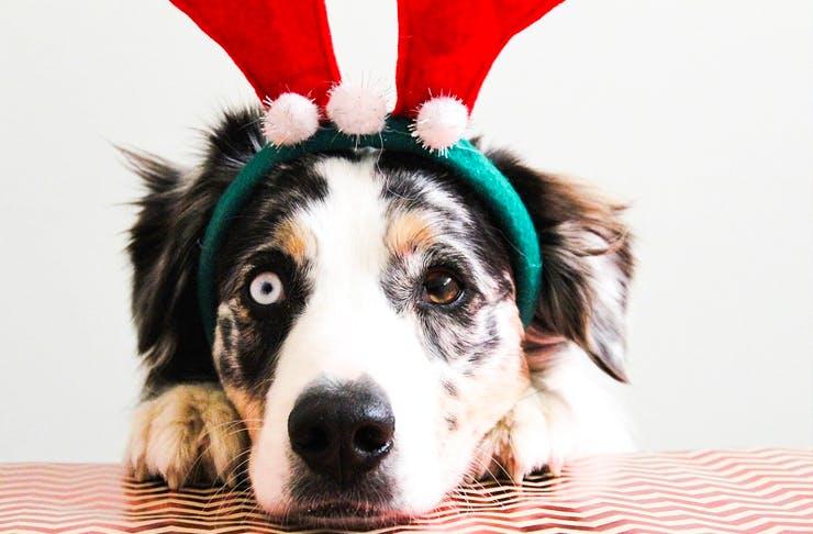 santa photos-pets