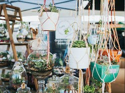 Saturday Fresh Markets At Brisbane MarketPlace