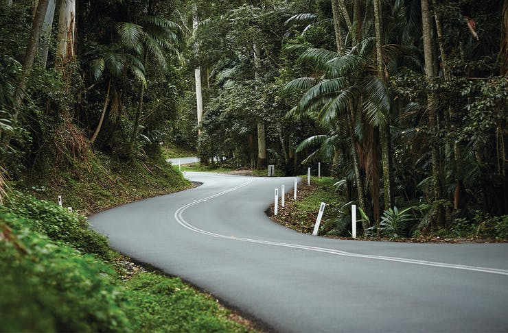 An atmospheric winding two lane road fringed by rainforest disappearing around a bend
