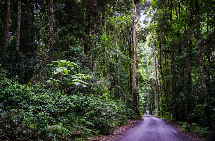 A narrow, empty road surrounded by lush rainforest on the Gold Coast.