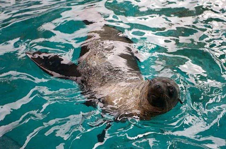 seal-kisses