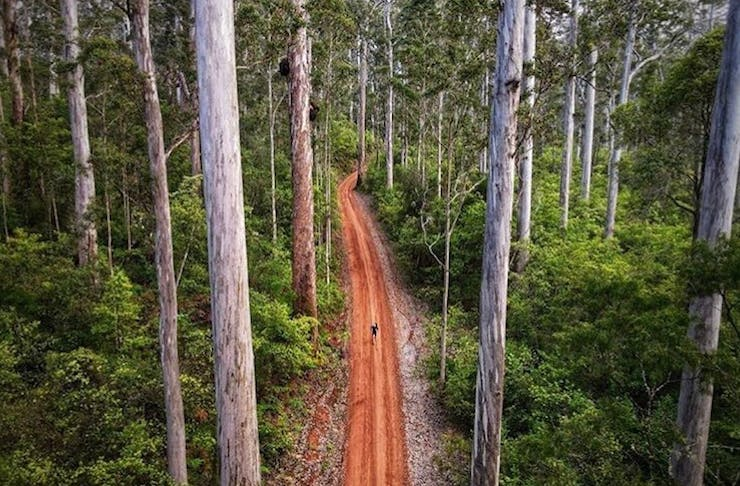Walking trail in Southern Forests